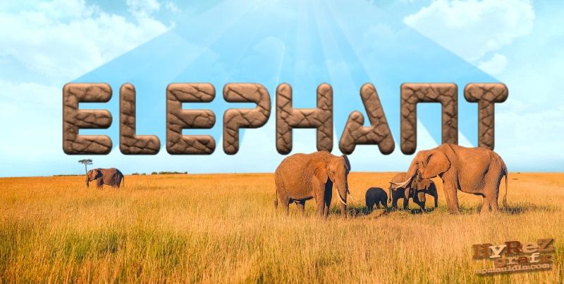 Elephant001.jpg